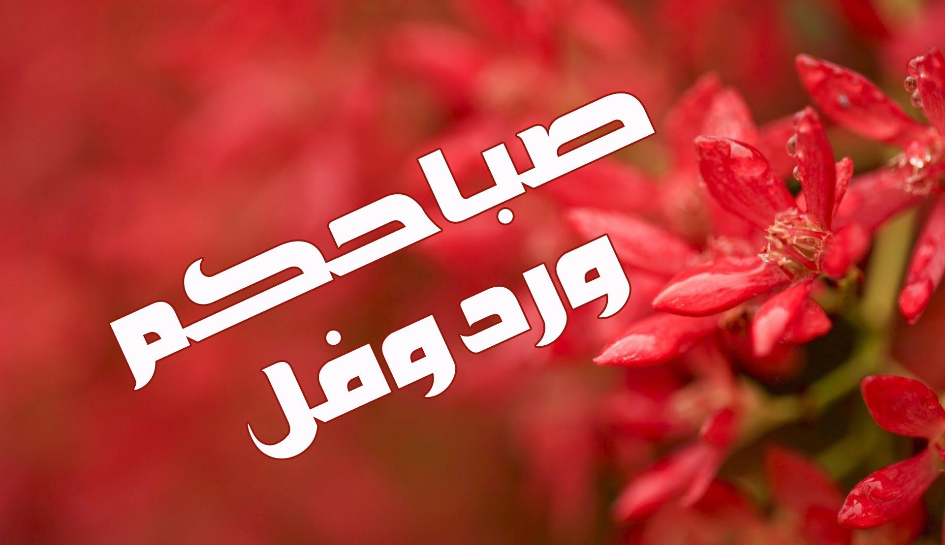 بالصور صباح الفل , اجمل صباح الفل والياسمين العطر 5267 2