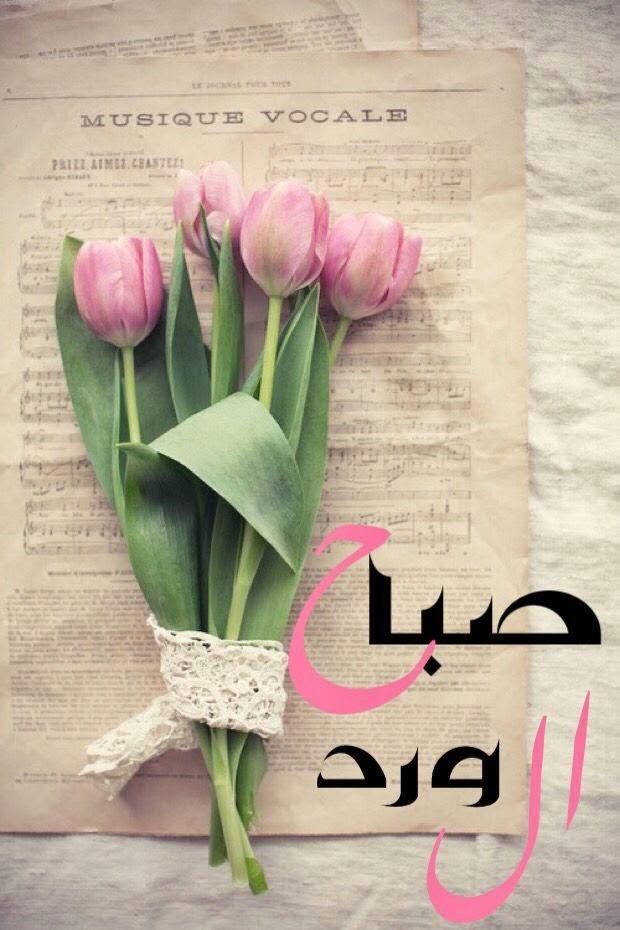 بالصور صباح الفل , اجمل صباح الفل والياسمين العطر 5267 8