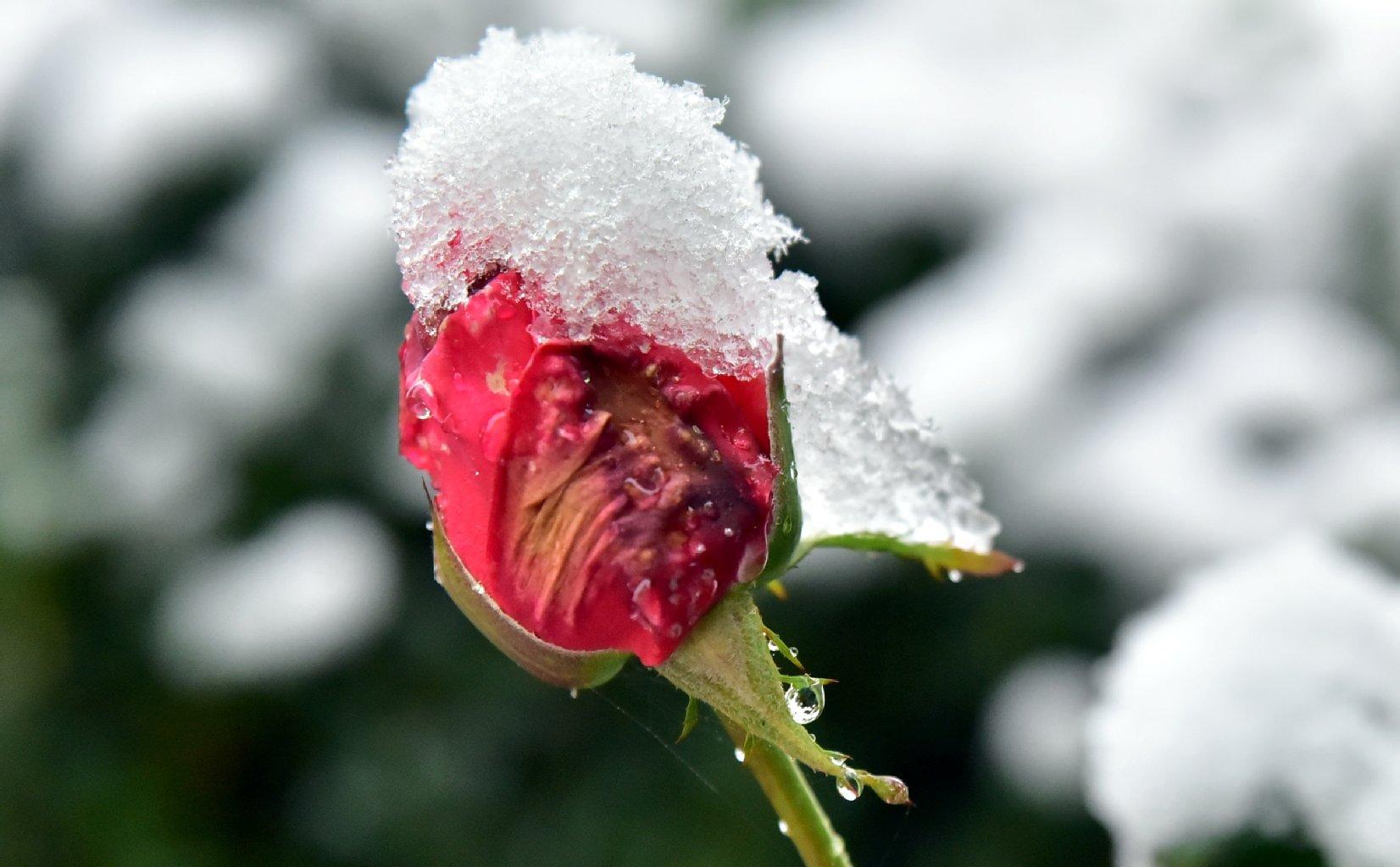 بالصور كم باقي على الشتاء , الشتاء فصل من فصول السنة 2224 4