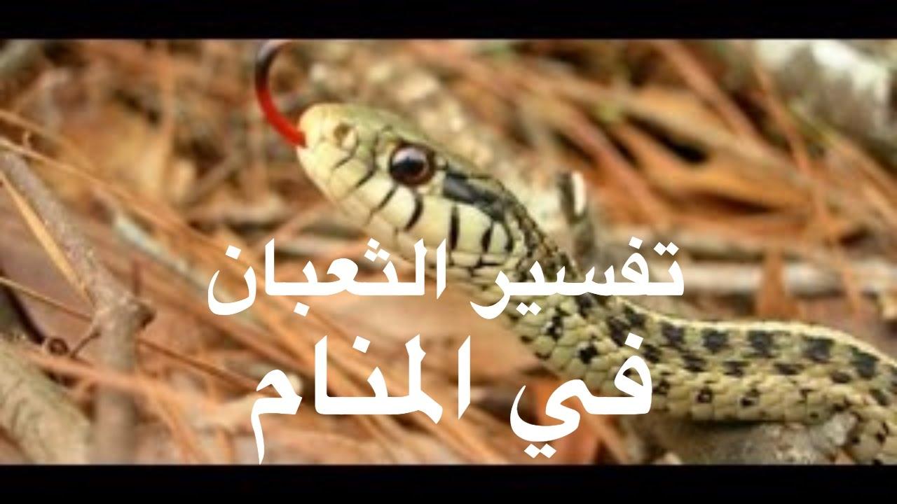صور الثعبان في المنام , تفسير الثعبان او الافعي في النام
