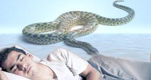 الثعبان في المنام , تفسير الثعبان او الافعي في النام