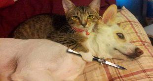 قطط مضحكة , اضحك من قلبك مع مواقف القطط