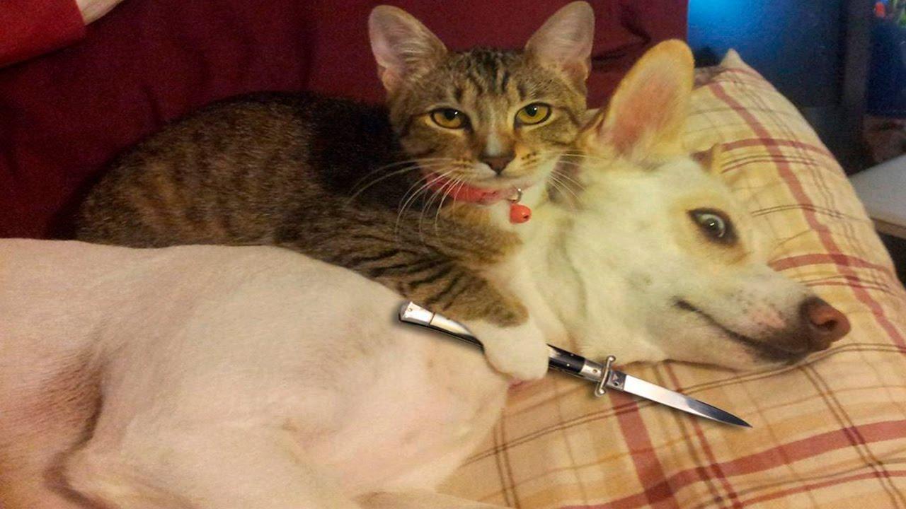 صور قطط مضحكة , اضحك من قلبك مع مواقف القطط
