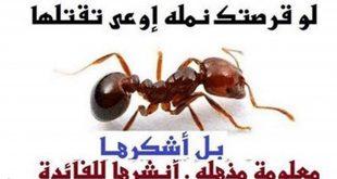 صوره معلومات عن النمل , اغرب ما تعرفه عن النمل