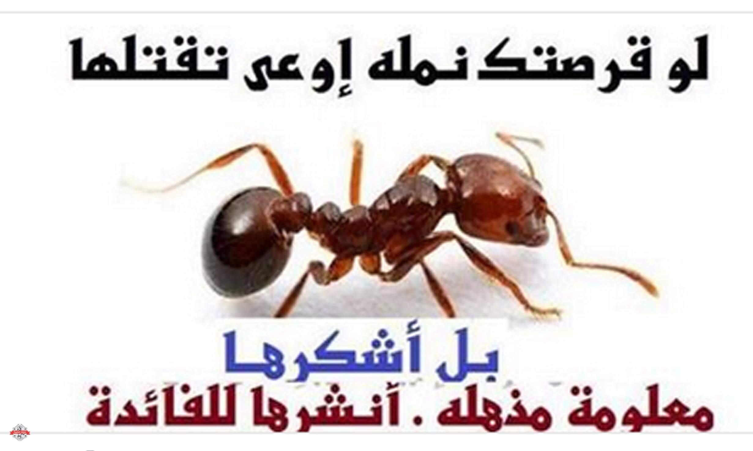 صورة معلومات عن النمل , اغرب ما تعرفه عن النمل