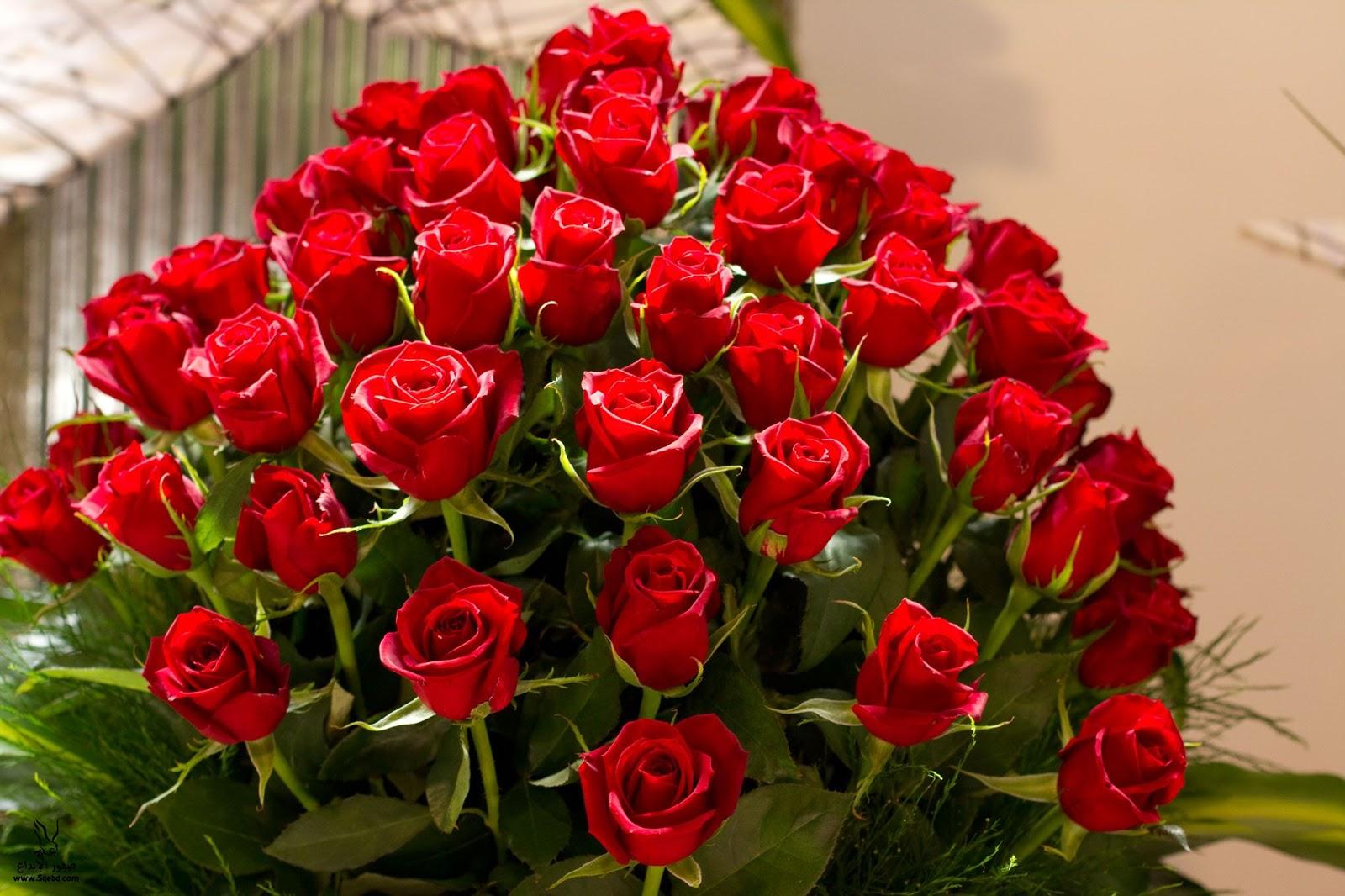 صورة صور زهور , اجمل صور زهور