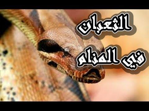 بالصور رؤية ثعبان في المنام , تفسر رؤيه الثعبان في المنام 5517