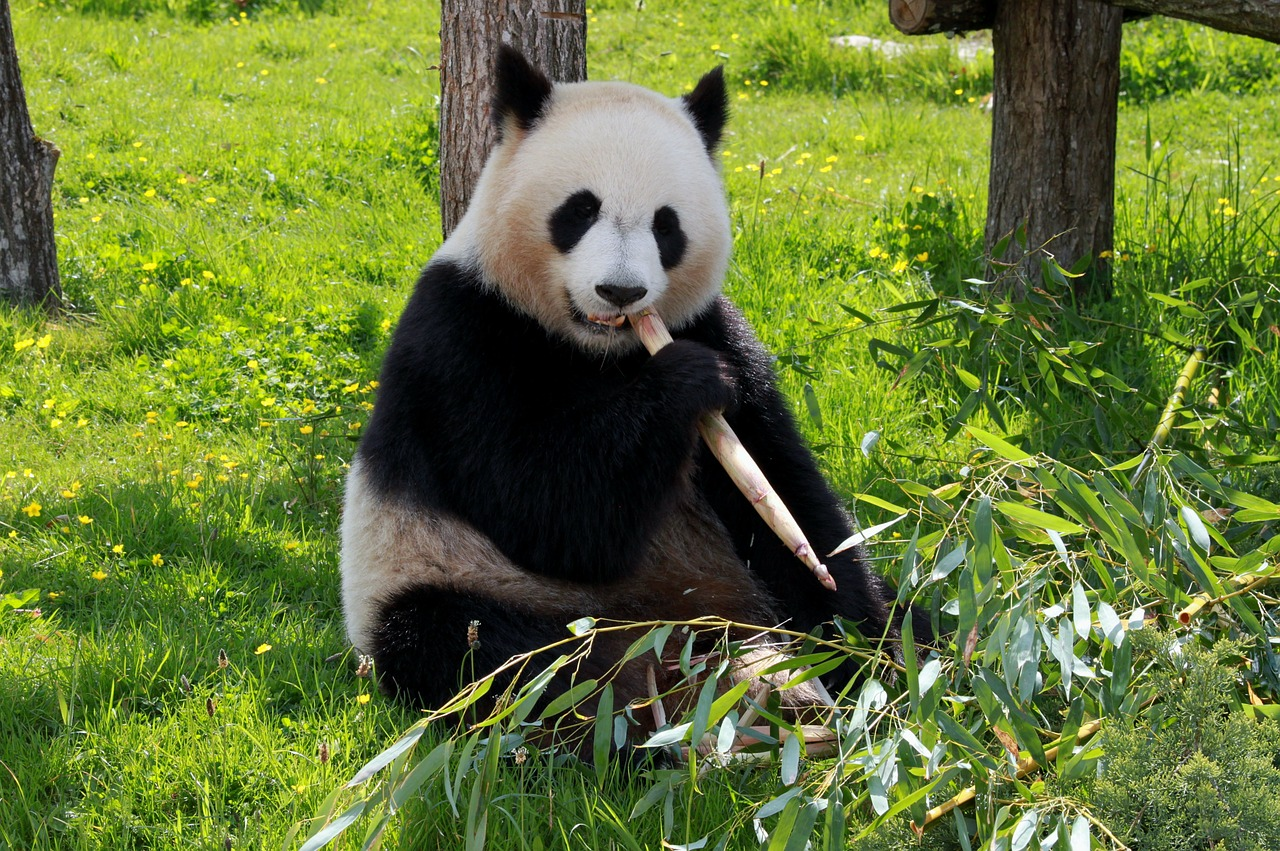 بالصور معلومات عن الحيوانات , حقائق عن الحيوانات 5700 1