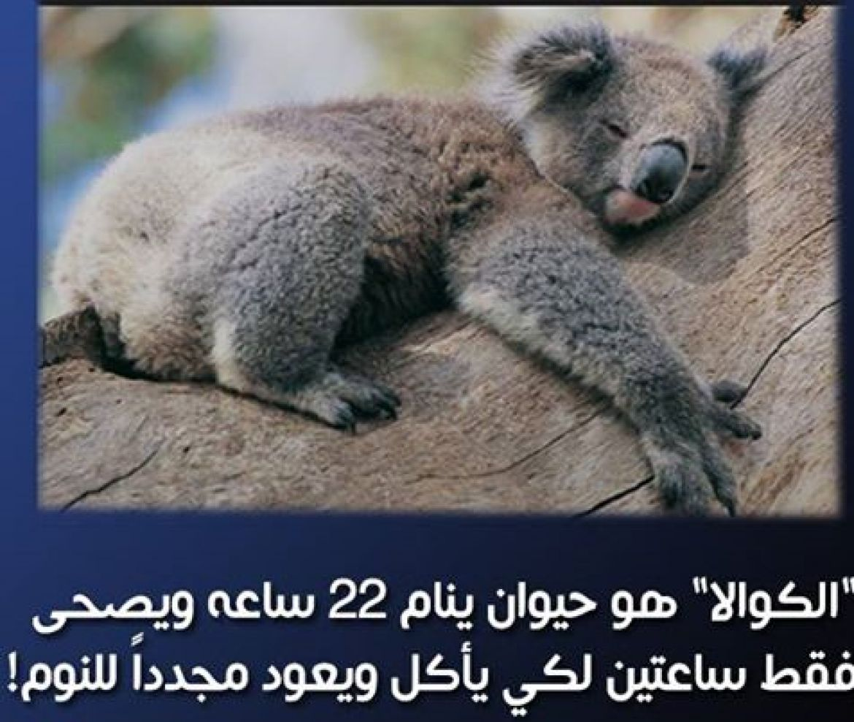 بالصور معلومات عن الحيوانات , حقائق عن الحيوانات 5700