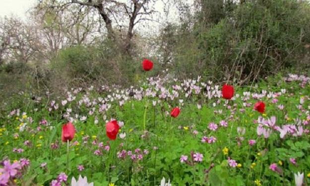 بالصور شعر عن الربيع , ابيات شعرية عن فصول السنه 5773 4