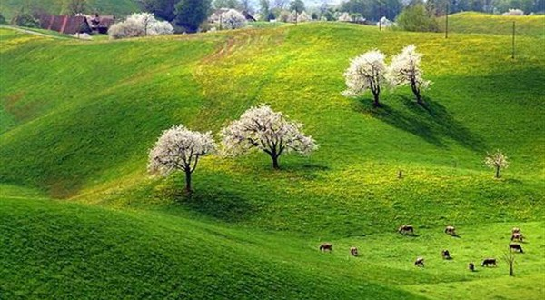 بالصور شعر عن الربيع , ابيات شعرية عن فصول السنه 5773 5