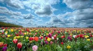 صوره صور خلفيات ورد , اجمل صور الورود