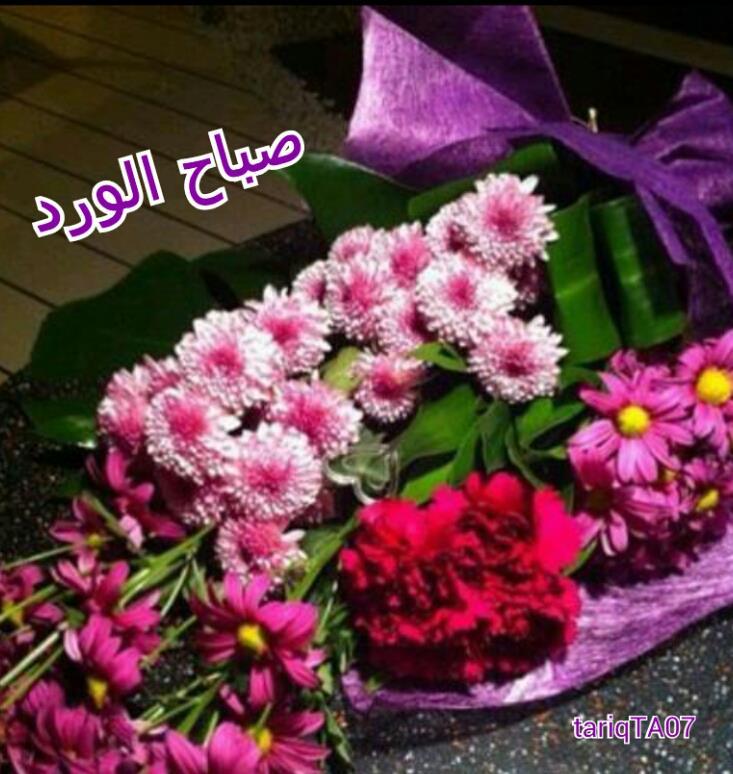 بالصور صباح الورد والفل , صباح الجمال والورد والفل وكل حلو علي الجميع 2318 10