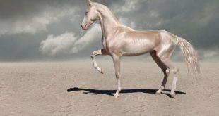 صوره اجمل حصان في العالم , الاحصنه الاجمل في العالم