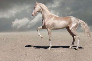 صور اجمل حصان في العالم , الاحصنه الاجمل في العالم