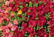 صور صور ورد رومانسي , اجمل واحلي الورود