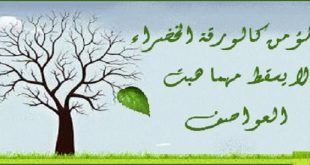 بالصور حكم دينية , كلمات دينيه معبره ومؤثره 4324 13 310x165