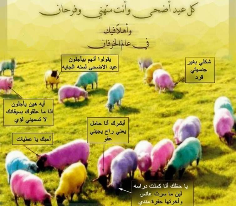 بالصور صور لعيد الاضحي , احتفالات عيد الاضحى المبارك 4412 11