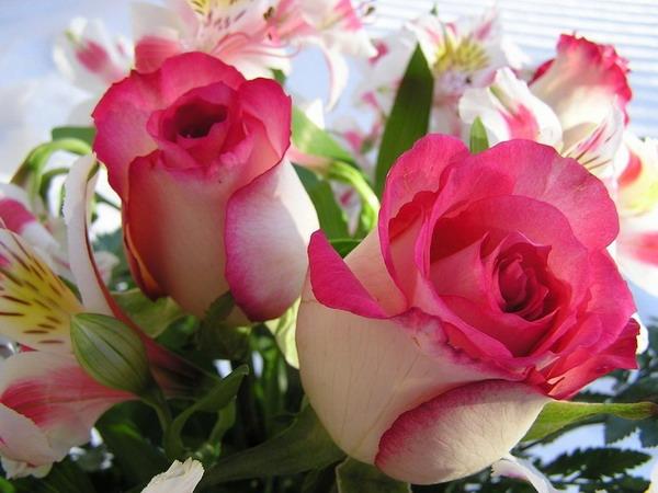 بالصور صور ورود طبيعيه , جمال الورد الطبيعى 4506 7