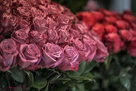 بالصور صور ورد طبيعي , اروع الزهور الطبيعية 5156 2