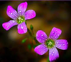 بالصور صور ورد طبيعي , اروع الزهور الطبيعية 5156 6
