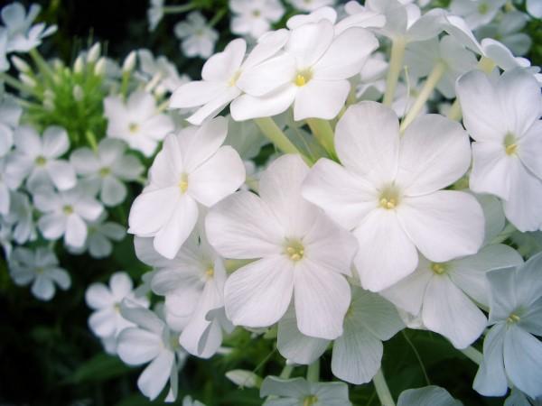 بالصور صور ورد طبيعي , اروع الزهور الطبيعية 5156