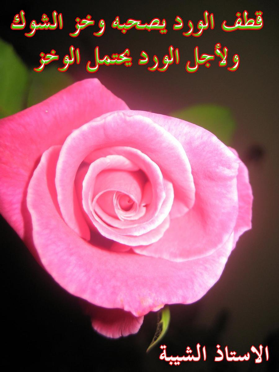 عبارات عن الورد احلى كلام