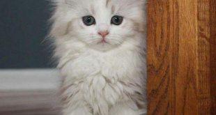 قطط جميلة , اروع صور القطط
