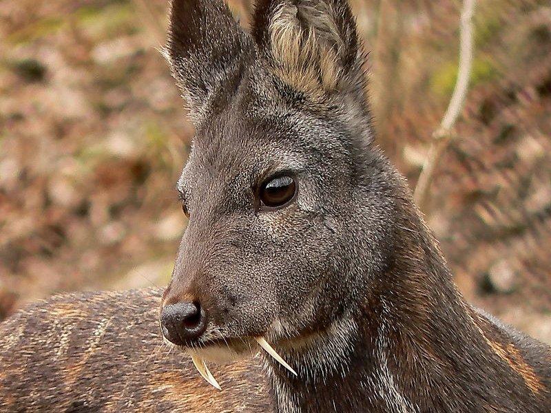 بالصور اغرب الحيوانات , اعجب صور الحيوانات 744 11