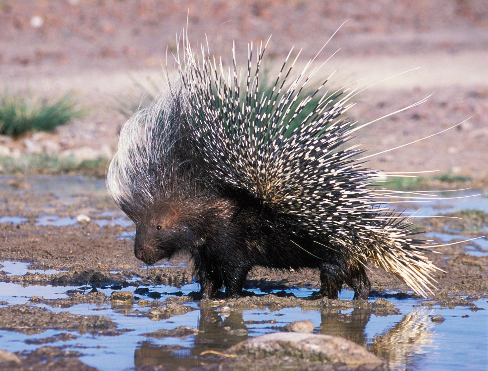 بالصور اغرب الحيوانات , اعجب صور الحيوانات 744 12
