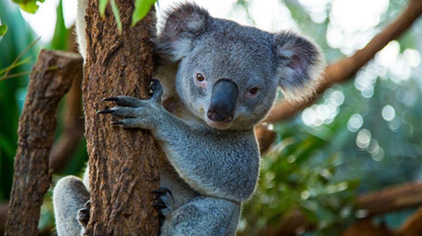 بالصور اغرب الحيوانات , اعجب صور الحيوانات 744 3