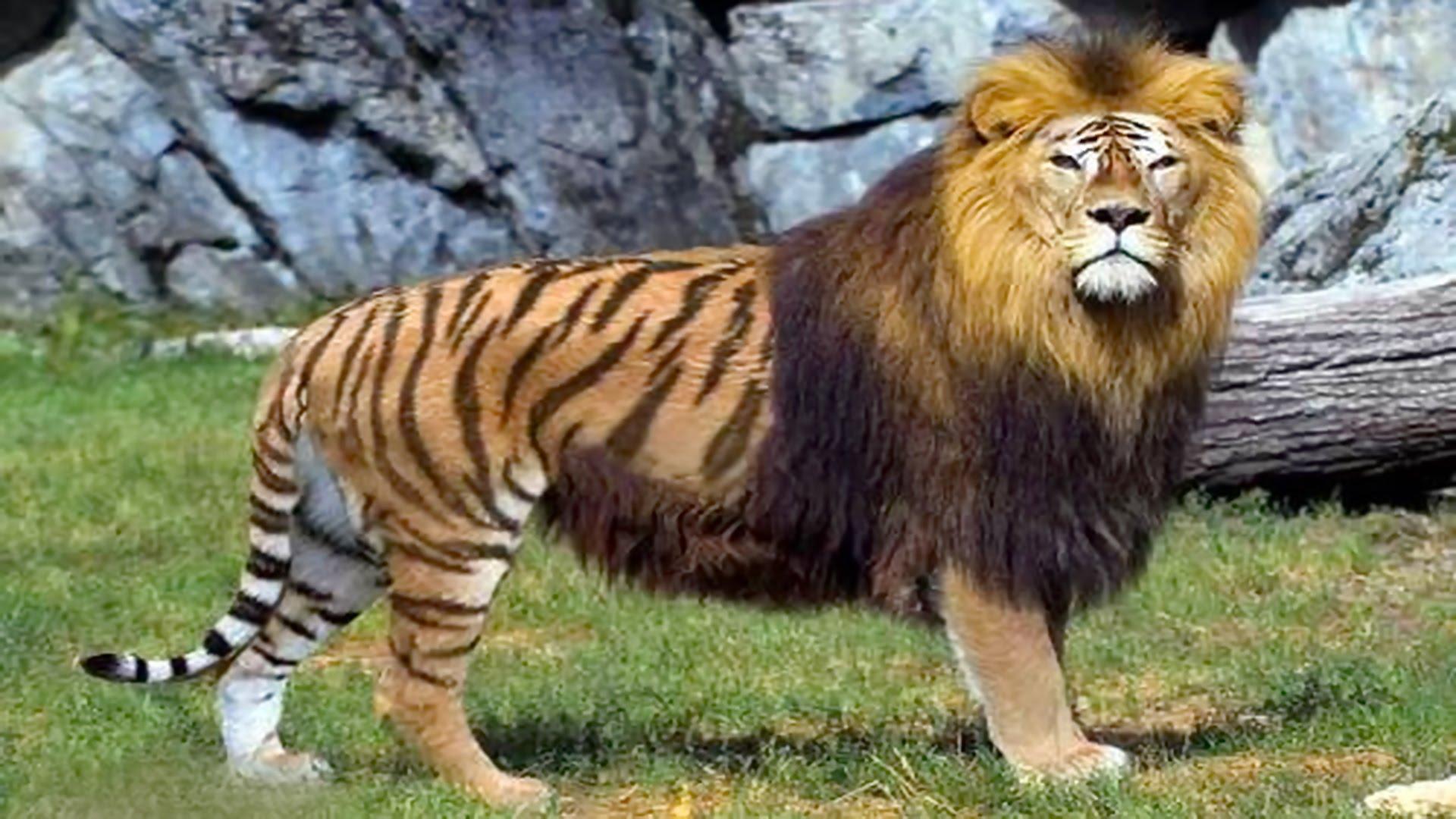 بالصور اغرب الحيوانات , اعجب صور الحيوانات 744 4