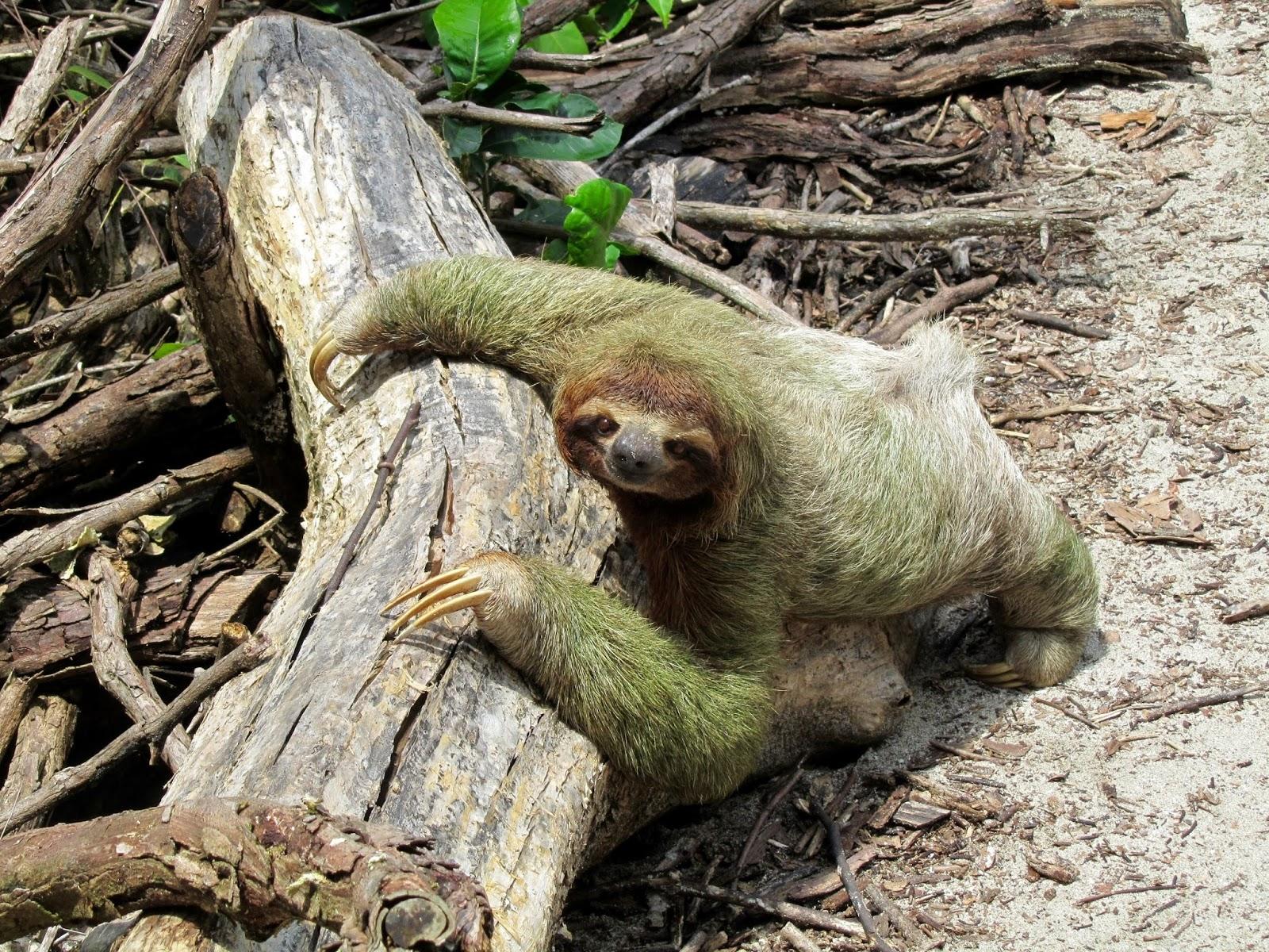 بالصور اغرب الحيوانات , اعجب صور الحيوانات 744 5