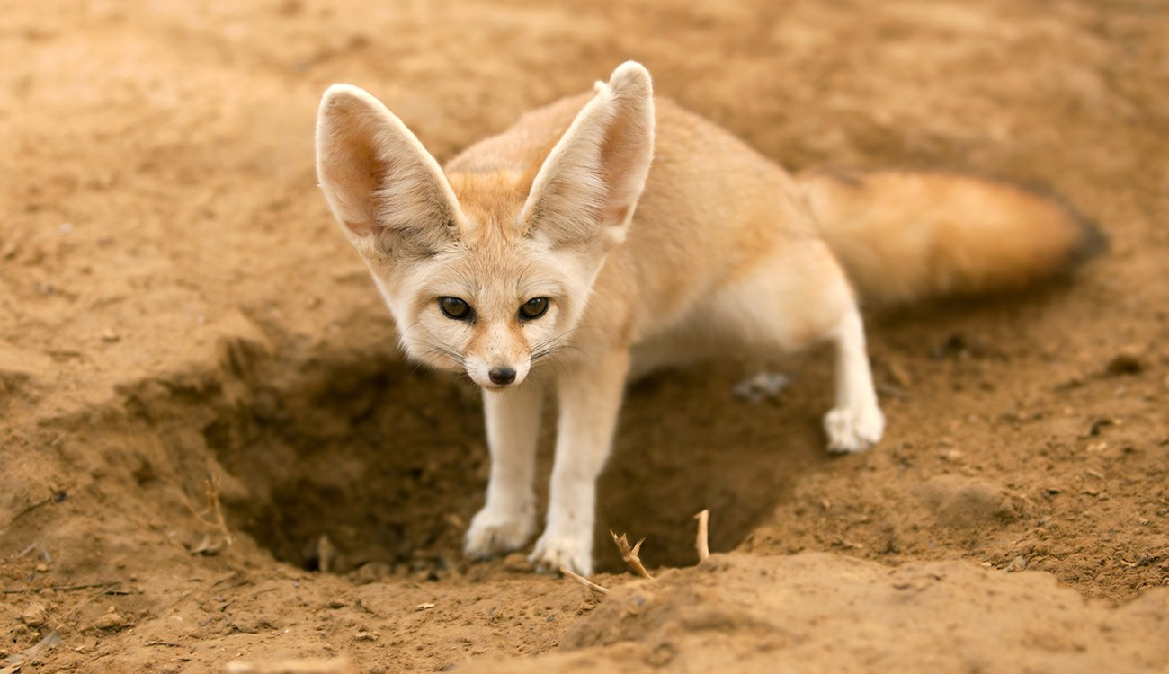 بالصور اغرب الحيوانات , اعجب صور الحيوانات 744 8
