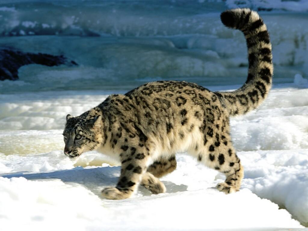 بالصور اغرب الحيوانات , اعجب صور الحيوانات 744 9