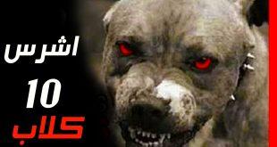صور اخطر انواع الكلاب , صور اشرس واخطر الكلاب