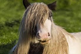 بالصور صور خيول , فرسه واحده لا تكفي 1874 10