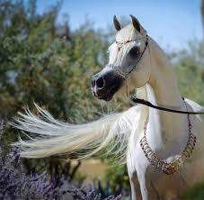 بالصور صور خيول , فرسه واحده لا تكفي 1874 11