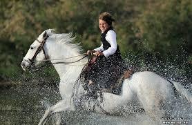 بالصور صور خيول , فرسه واحده لا تكفي 1874 6
