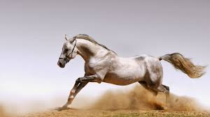 بالصور صور خيول , فرسه واحده لا تكفي 1874 8