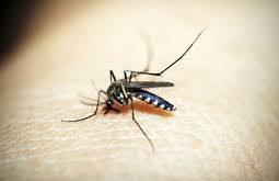 صوره مرض الملاريا , خطورة واسباب مرض الملاريا