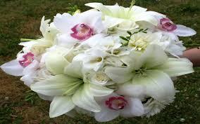 بالصور خلفيات زهور , املئي هاتفك ببعض الزهور 1985 5