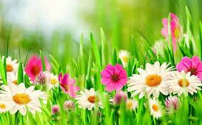 بالصور خلفيات زهور , املئي هاتفك ببعض الزهور 1985 6