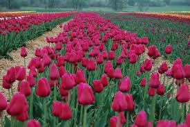 بالصور خلفيات زهور , املئي هاتفك ببعض الزهور 1985 7