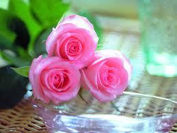 بالصور خلفيات زهور , املئي هاتفك ببعض الزهور 1985 8