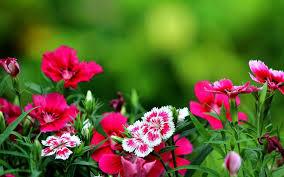 بالصور خلفيات زهور , املئي هاتفك ببعض الزهور 1985 9