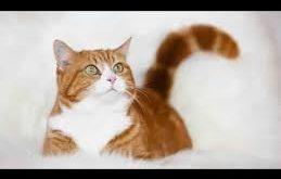 بالصور صور قطط جميلة , القطط بين الغدر والوفاء 2023 13 259x165