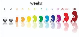 حساب الحمل بالاسابيع , افضل الطرق لحساب فتره الحمل