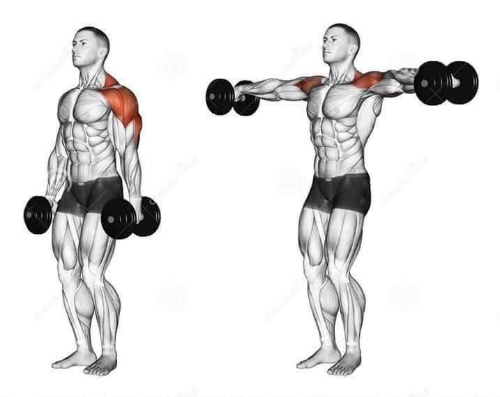 صورة تمارين الكتف , تدريبات عضلات الكتف 236 1