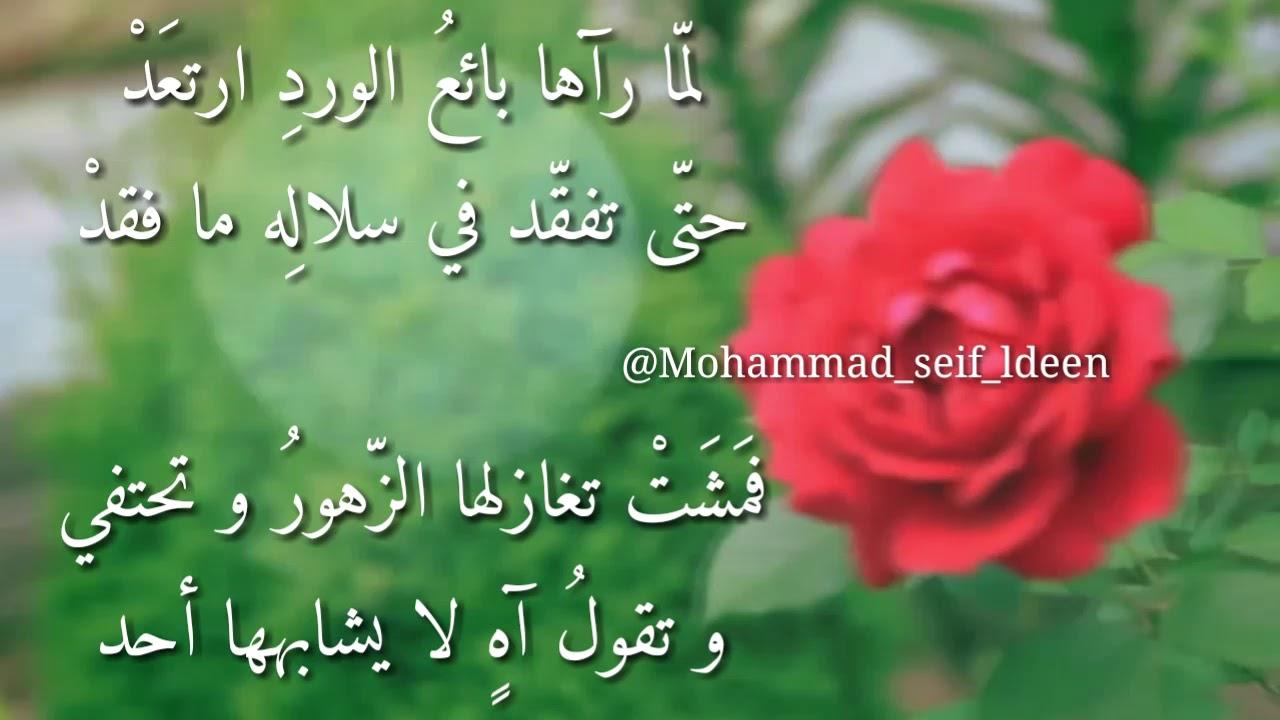 كلام عن جمال الورد تويتر Aiqtabas Blog
